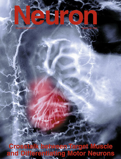 Synaptic Plasticity and Repair Group (Vincenzo De Paola) – Cover article in Neuron 35(6), 2002